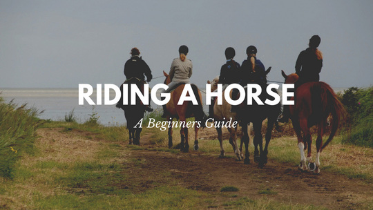 Find The Perfect Horse Name | Horsemart