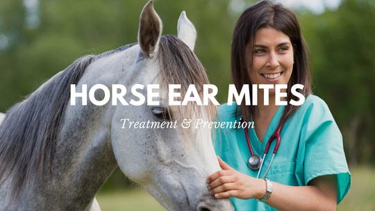 Treating horse ear mites   Horsemart